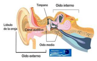 tipos-de-sordera-oído-externo-e-interno